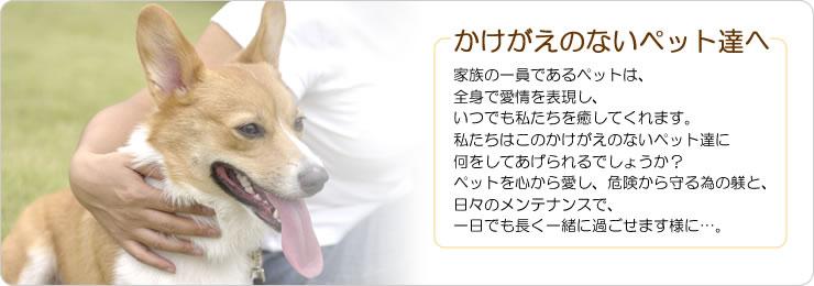 「ドッグ・テイル」はCOACH(コーチ)の犬用首輪・犬用リードや肉球クリームなどのペットグッズ・雑貨の通販サイトです。